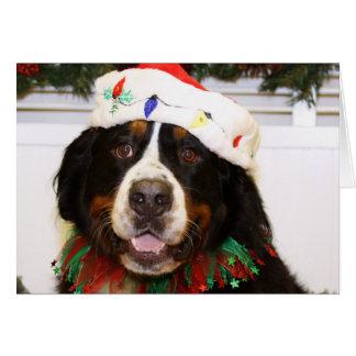 Cão de Grover - de montanha de Bernese Cartão
