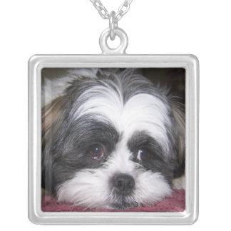 Cão de Shih Tzu Colar Com Pendente Quadrado