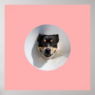 Cão de sorriso engraçado pôster