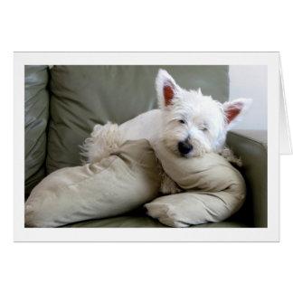 Cão de Westie cartão vazio tão confortável e