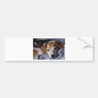 Cão do Lebreiro-Harrier Adesivo De Para-choque