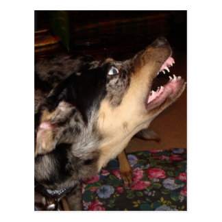 Cão do leopardo de Catahoula que mostra os dentes Cartoes Postais