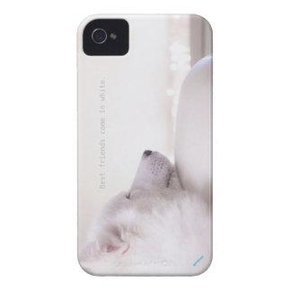 Cão do Samoyed, capa de iphone 4
