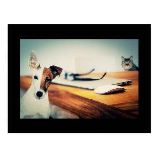 Cão e gato bonito no cartão do escritório