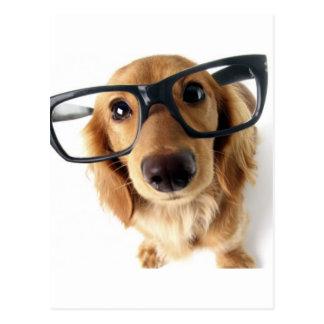 Cão engraçado cartão postal