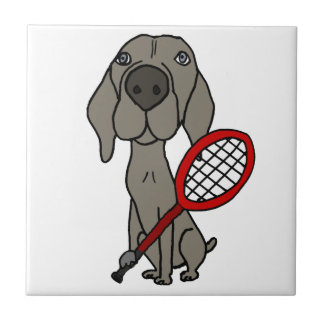 Cão engraçado de Weimaraner que joga o tênis
