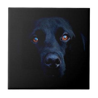 Cão escuro animal abstrato