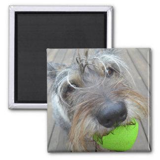Cão feliz com ímã da bola ímã quadrado