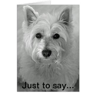 Cão impressionante de Westie - cartão pesaroso