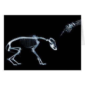 Cão mau azul dos esqueletos do raio X Cartao