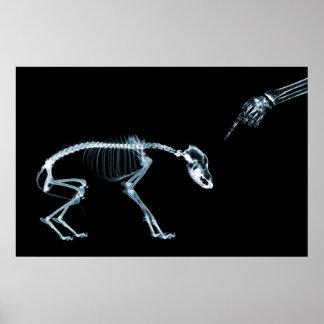 Cão mau azul dos esqueletos do raio X Posteres