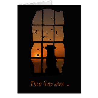 Cão no cartão do memorial da janela
