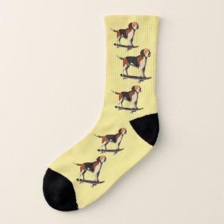 Cão no skate, as meias pequenas dos homens
