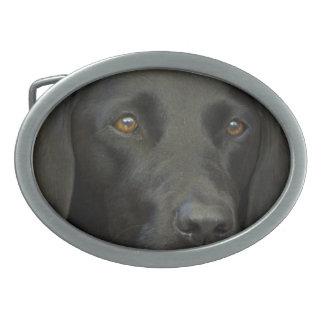 Cão preto de Labrador