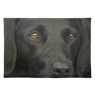 Cão preto de Labrador Suporte Para Prato