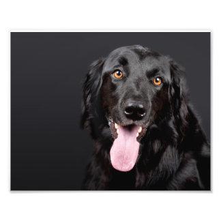 cão preto que faz uma sessão fotográfica impressão de foto