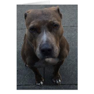 Cão que desculpa-se pelo aniversário faltado cartão comemorativo