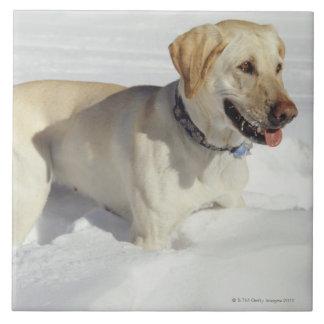 Cão que está na neve azulejo quadrado grande