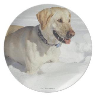 Cão que está na neve pratos