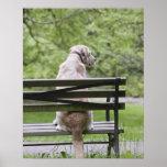 Cão que senta-se no banco de parque poster