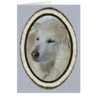 Cão *Sandy - desculpa/pesaroso Cartão Comemorativo