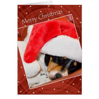 Cão Snoozing no cartão de Natal do chapéu do papai