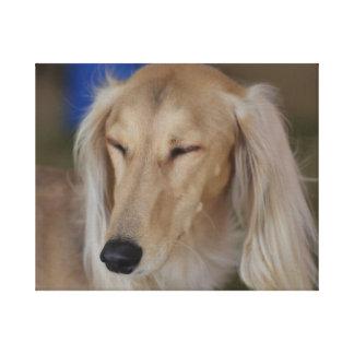 Cão sonolento de Saluki Impressão Em Tela