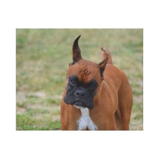 Cão surpreendente do pugilista impressão em tela