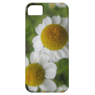Capa Barely There Para iPhone 5 A margarida floresce a caixa