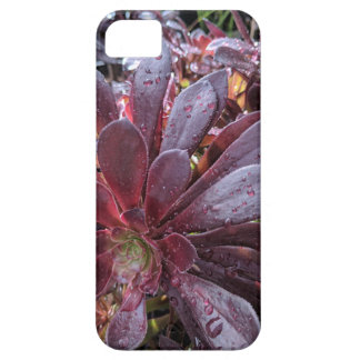 Capa Barely There Para iPhone 5 Cacto