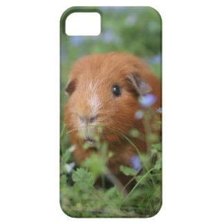 Capa Barely There Para iPhone 5 Cobaia peluches bonito do gengibre fora na grama