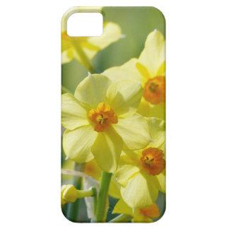 Capa Barely There Para iPhone 5 Daffodils bonito, narciso 03.2_rd