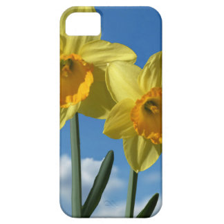 Capa Barely There Para iPhone 5 Dois Daffodils amarelos 2,2