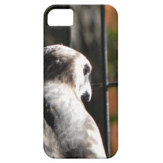 Capa Barely There Para iPhone 5 Falcão em um santuário de pássaro