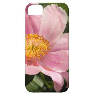 Capa Barely There Para iPhone 5 Flor cor-de-rosa da peônia inteiramente aberta