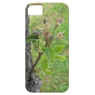Capa Barely There Para iPhone 5 Galho da árvore de pera com os botões no primavera