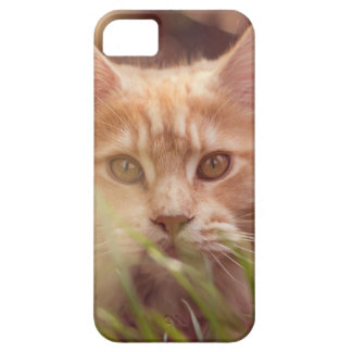 Capa Barely There Para iPhone 5 gato