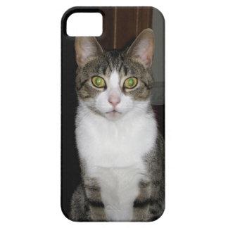 Capa Barely There Para iPhone 5 Gato de gato malhado com os olhos verdes grandes