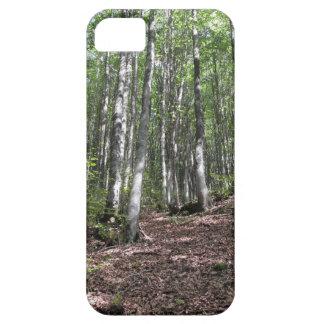Capa Barely There Para iPhone 5 Paisagem da floresta da faia no verão. Toscânia,