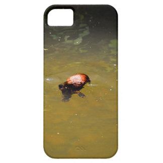 CAPA BARELY THERE PARA iPhone 5 PARQUE AUSTRÁLIA DE PLATYPUS EUNGELLA NATIOANL