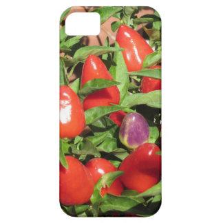 Capa Barely There Para iPhone 5 Pimentas de pimentão vermelho que penduram na
