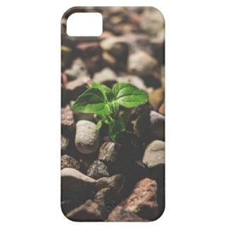 Capa Barely There Para iPhone 5 Planta frondosa verde que começa crescer em