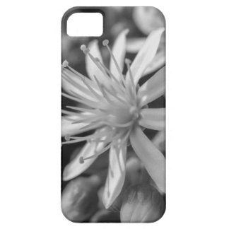 Capa Barely There Para iPhone 5 SpringFlower