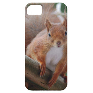 Capa Barely There Para iPhone 5 Squirrel esquilo Écureuil - Louis Glineu