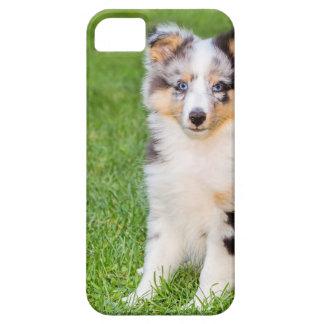 Capa Barely There Para iPhone 5 Um cão novo do sheltie que senta-se na grama