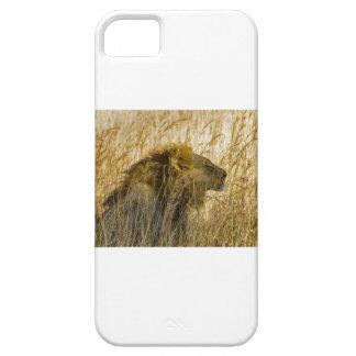 Capa Barely There Para iPhone 5 Um leão espera, Zimbabwe África