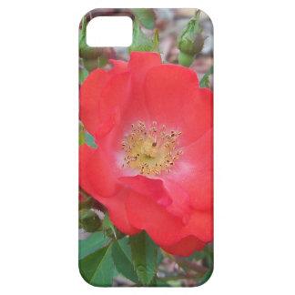 Capa Barely There Para iPhone 5 Um salmão simples coloriu aberto aumentou