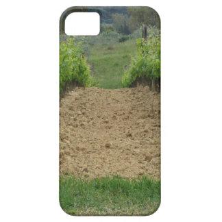 Capa Barely There Para iPhone 5 Vinhedo no primavera. Toscânia, Italia