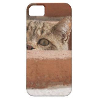 Capa Barely There Para iPhone 5 Wildcat novo curioso da atenção dos olhos de gato