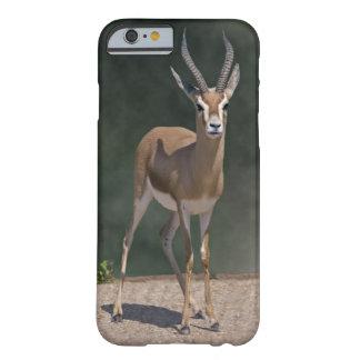 Capa Barely There Para iPhone 6 Caso do iPhone 6 da gazela de Dorcas